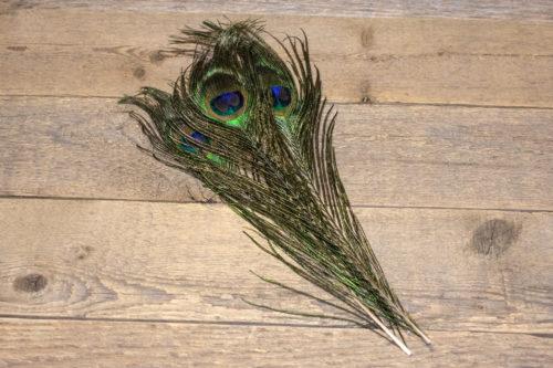 Premium Peacock